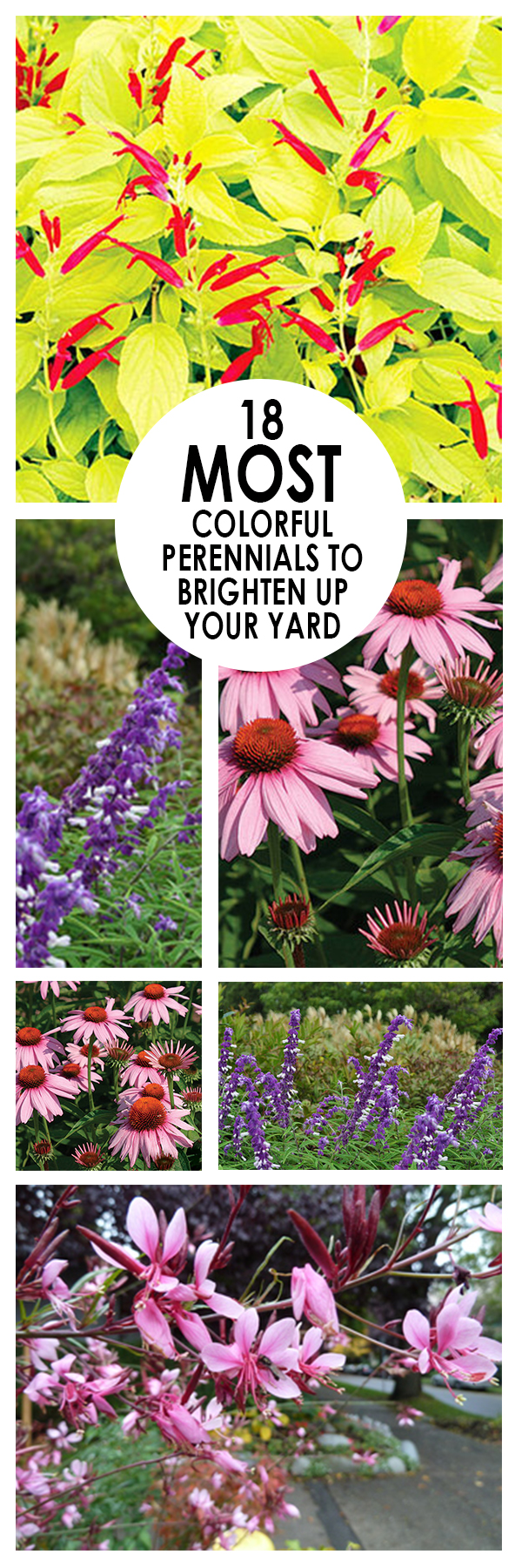 18 Most Colorful Perennials to Brighten Up Your Yard (1)