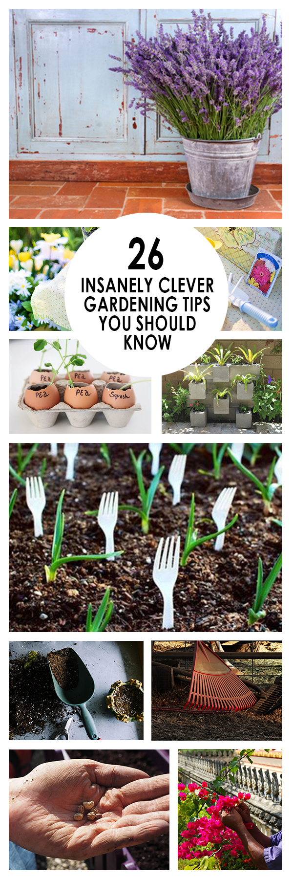 Gardening, home garden, garden hacks, garden tips and tricks, growing plants, plants, vegetable gardening, planting fruit, flower garden, outdoor living. #gardening #gardeningtip #outdoorliving #gardeners #gardeninghacks #mastergardenerhacks