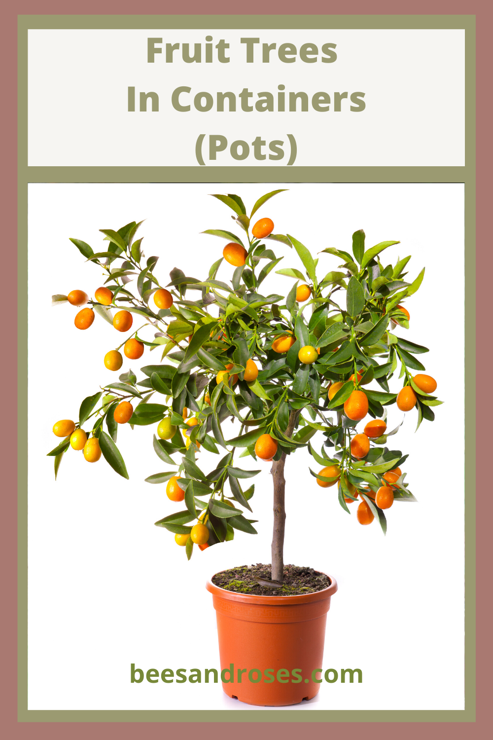 When growing fruit trees in containers, the type of pot you use can make or break your success. Learn about the pots that are best and also what type of soil will provide the best nutrition for the tree. #beesandrosesblog #fruitgardening #fruittreesincontainers #containergardening