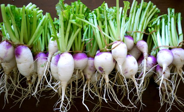 Food Scraps, Food that Regrows, Food Regrow, Vegetable garden, Vegetable gardening, vegetable propagation