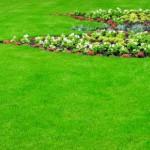Natural pest control, gardening hacks, garden pest control, tips and tricks, gardening tips and tricks, popular pin, controlling grubs