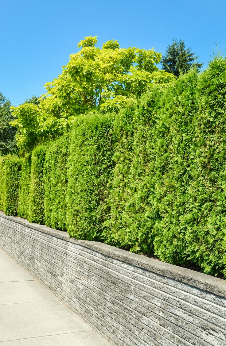 Living Fence Ideas