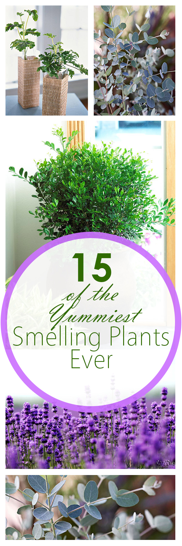 Best Smelling Plants, Garden Ideas, Gardening Ideas, Plants, Plant Care, Indoor Gardening, Indoor Garden, Houseplant Care
