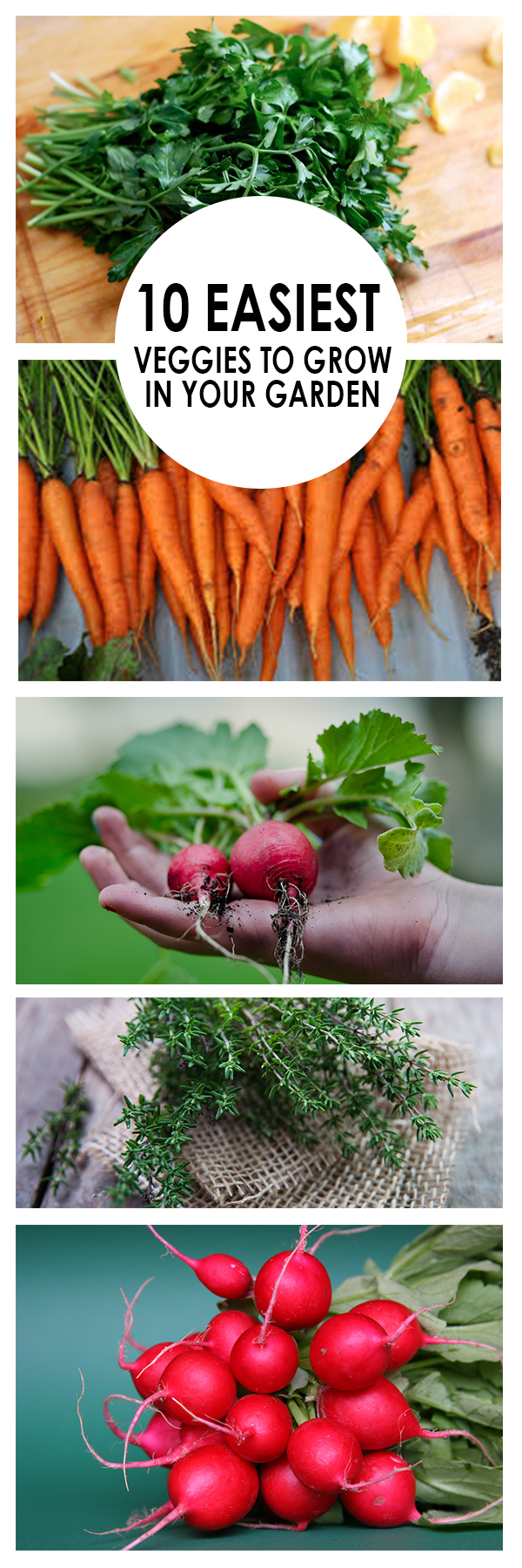 Gardening, home garden, garden hacks, garden tips and tricks, growing plants, gardening DIYs, gardening crafts, popular pin, backyard hacks, backyard tips and tricks, outdoor living, home and garden, vegetable gardening