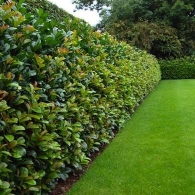 15 Amazing Living Fence Ideas for Your Yard