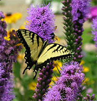 Ways To Attract Butterflies