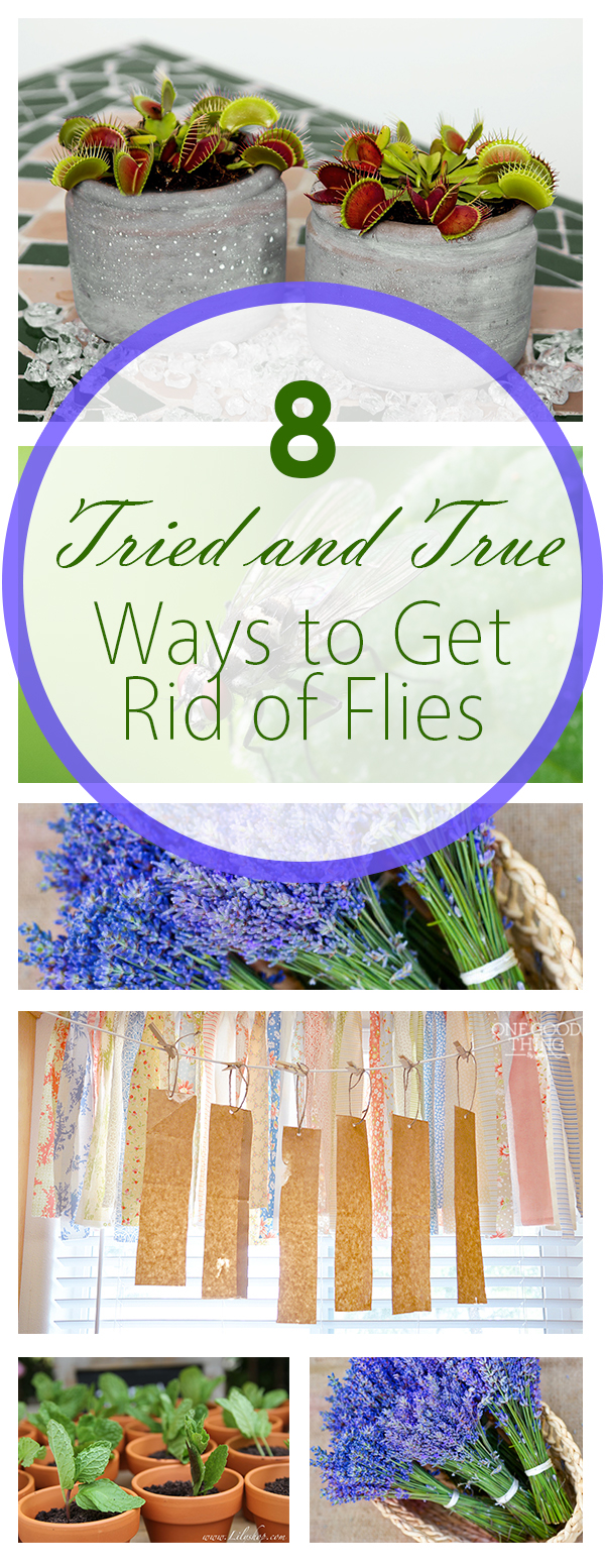 8 tried and true ways to get rid of flies bees and roses