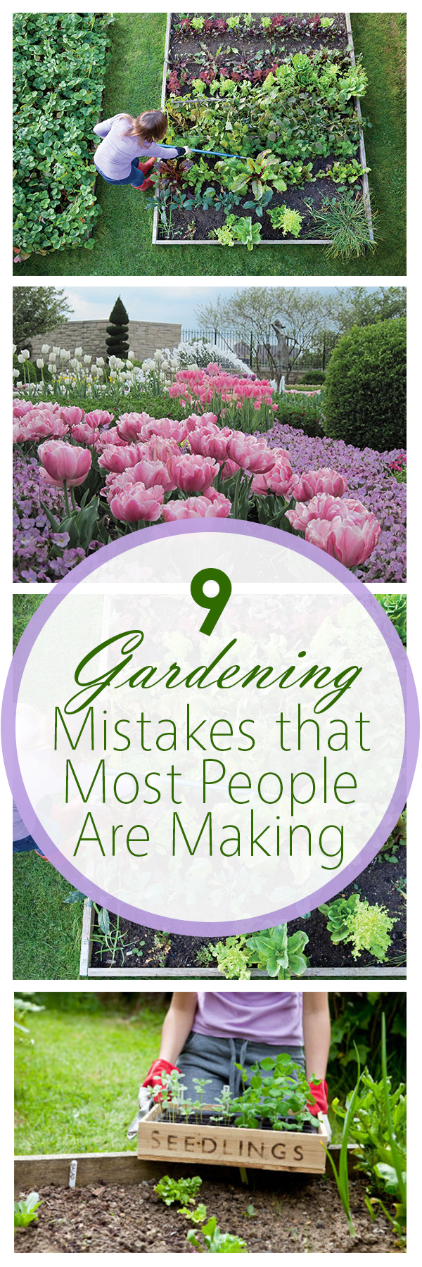 Gardening mistakes, gardening tips and tricks, gardening hacks, how to avoid gardening mistakes, popular pins, landscaping tips and tricks.