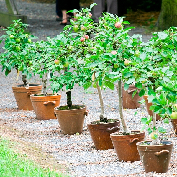 Tips and Tricks for Growing Fruit Trees in
