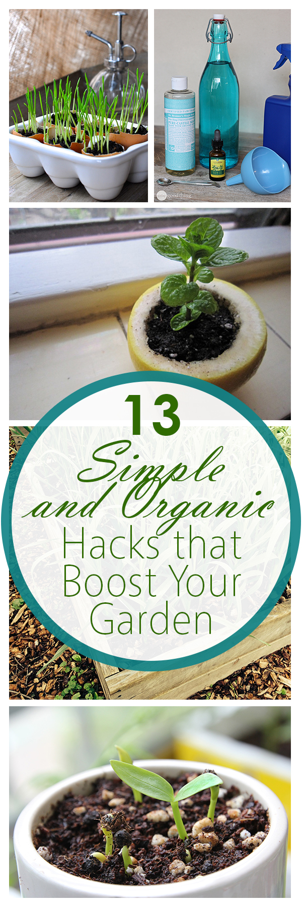 13 Simple and Organic Hacks that Boost Your Garden
