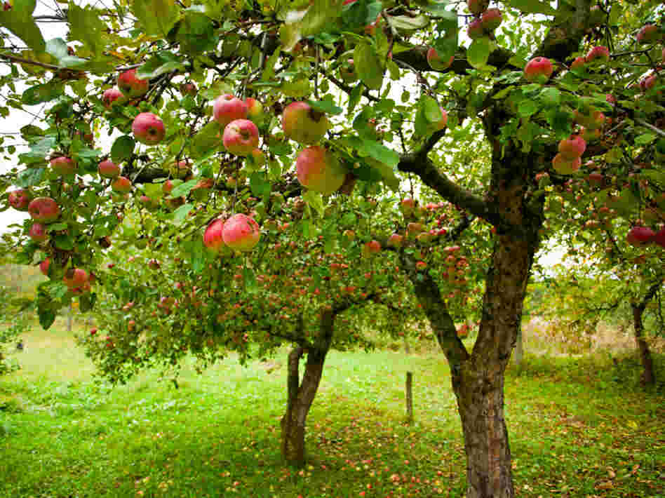 13 TIps to Planting Successful Fruit Trees
