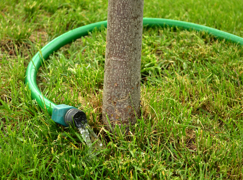 13 Tips to Planting Succesful Fruit Trees