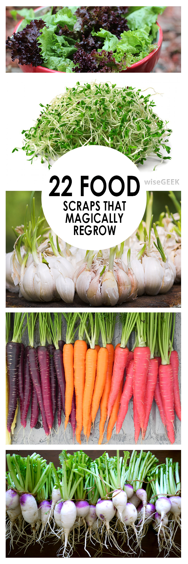 Food Scraps, Food that Regrows, Food Regrow, Vegetable garden, Vegetable gardening, vegetable propagation