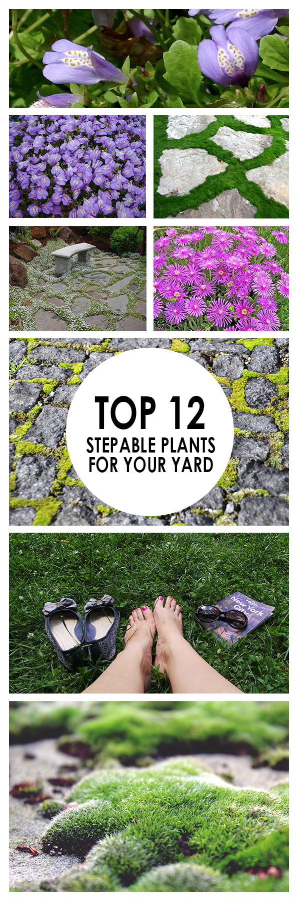 Top 12 Stepable Plants for Your Yard (1)