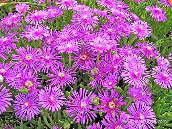 Top 12 Stepable Plants for Your Yard