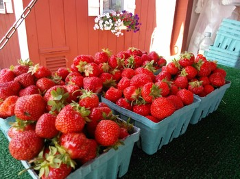 Growing strawberries, fruit gardening, strawberries, popular pin, gardening, strawberry gardening, landscaping, outdoor living.