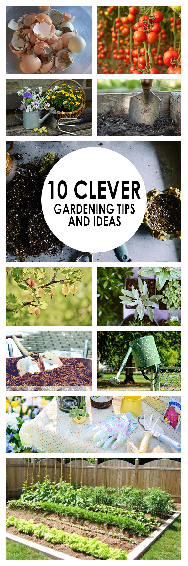 10 Clever Gardening Tips and Ideas (1)