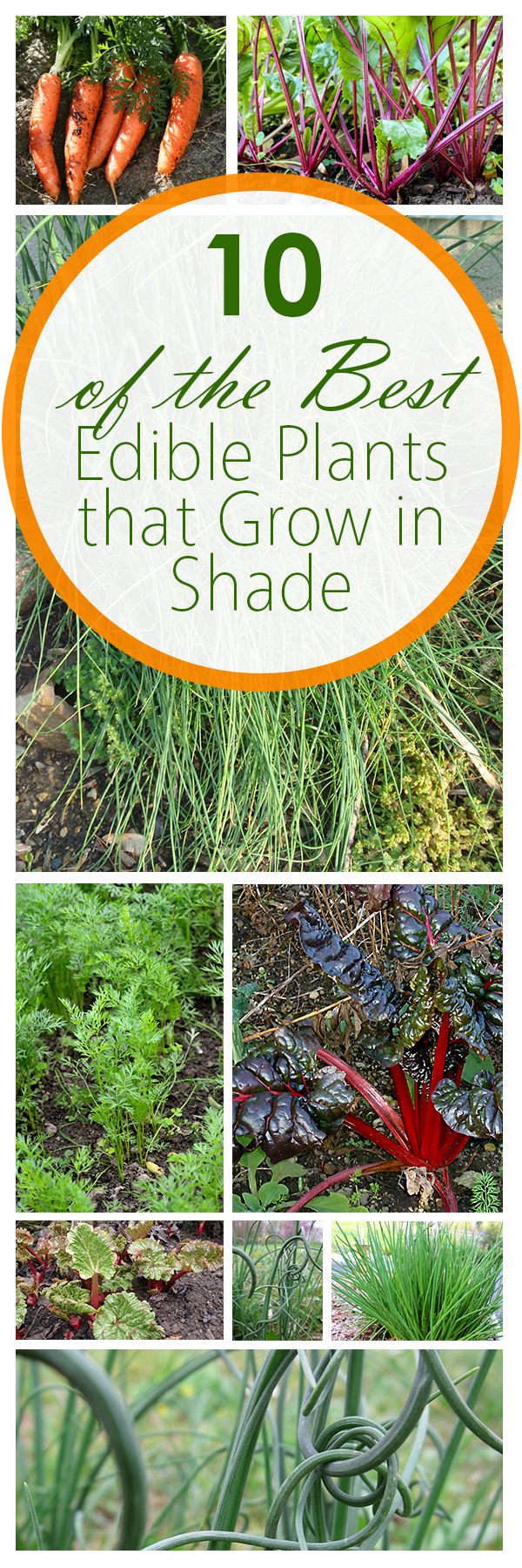 Shade Plants, Edible plants, gardening hacks, gardening tips, easy gardening ideas, popular pin, DIY gardening, vegetable gardening hacks, edible garden.