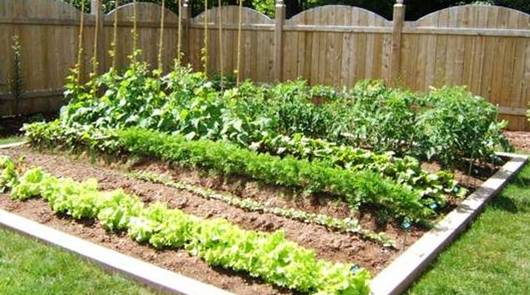 16 Hacks For The Best Vegetable Garden Ever Bees And Roses