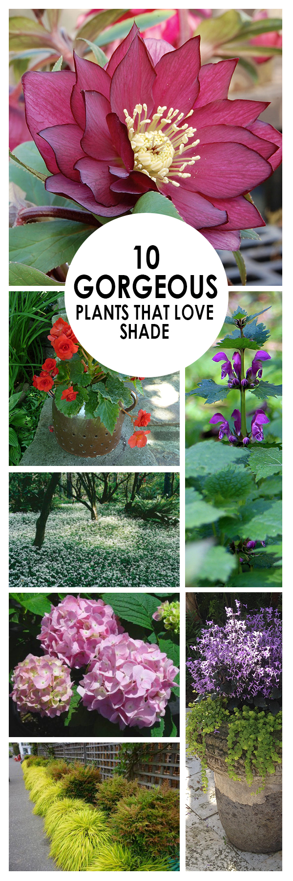 Shade Plants, Shade Garden, Plants, Gardening, home garden, garden hacks, garden tips and tricks, growing plants, plants, vegetable gardening, planting fruit, flower garden, outdoor living