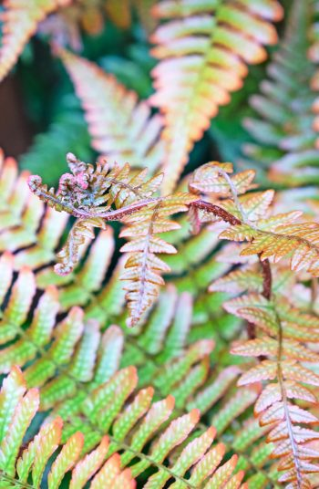 Here are some easy to grow shade plants that love areas of shade. Use these plants for the shade to decorate your garden! Plus, who doesn't love a fern?