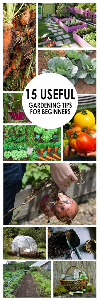 15 useful gardening tips for beginners bees and roses - Gardening tips for beginners ...