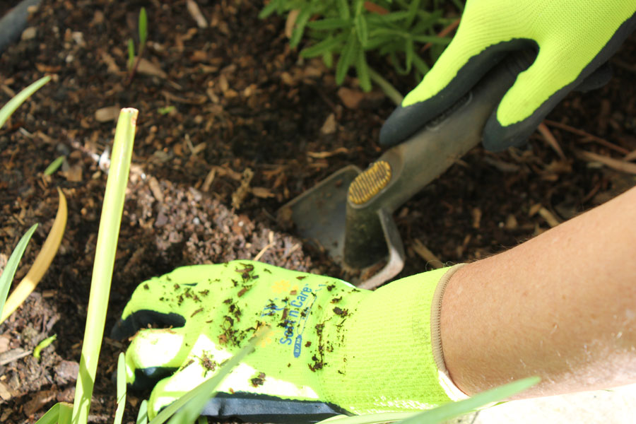15 useful gardening tips for beginners page 16 of 16 - Gardening tips for beginners ...