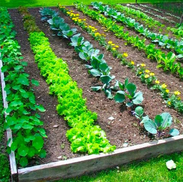Simple Vegetable Garden Ideas For Your Living: 16 Hacks For The Best Vegetable Garden Ever