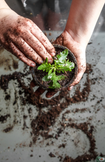 Did you know that coffee grounds can help act as a pest control in your garden? These great vegetable garden hacks will help you have a high yield for years to come.