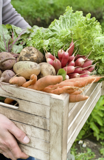 Before you spend a lot of time planting your seeds, try testing a few first to make sure they are good. These great vegetable garden hacks will help you have a high yield for years to come.