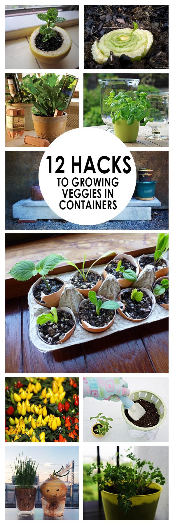Gardening Hacks, Container gardening, DIY container gardening, gardening hacks, popular pin, gardening tips, vegetable gardening.