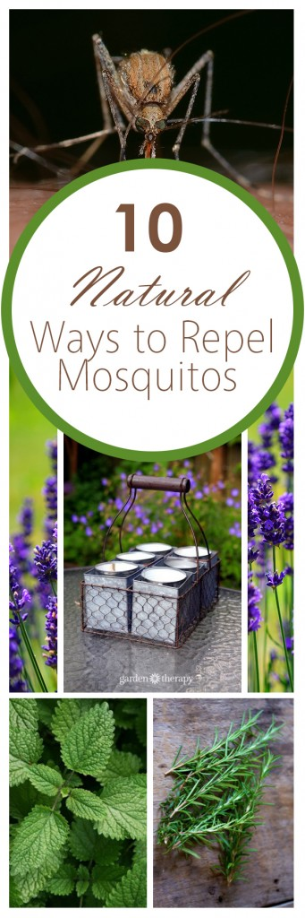 Pest control, pest control hacks, easy ways to control pests, popular pin, DIY pest control, natural pest control.