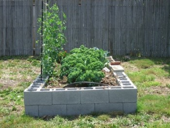 Budget Gardening, Budget Gardening ideas, Gardening for Beginners, Gardening Tips and Tricks