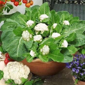 Fall gardening, fall vegetable gardening, Fall Garden Vegetables, Gardening, Gardening Ideas, Garden Ideas, Vegetable Gardening for Beginners