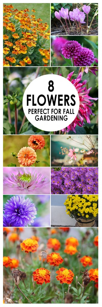 Fall gardening, flowers, perrennials, cold weather gardening, popular pin, gardening hacks, gardening tips, gardening 101