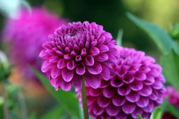 Fall Gardening, Flower Gardening, Flower and Garden, Garden Ideas, Gardening, Gardening Ideas