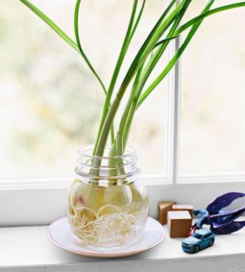 Garlic. Food that regrows in water.