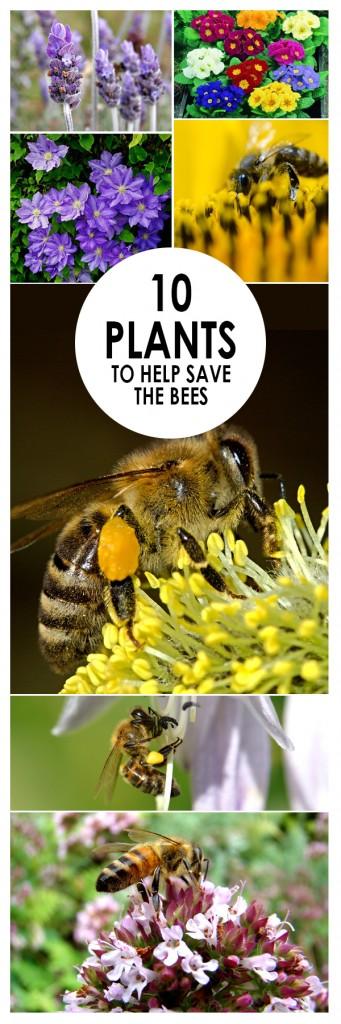 Save The Bees, Plants, Garden, Flower, Flower Garden, Flower Garden Ideas, Garden Ideas, Gardening, Gardening Ideas
