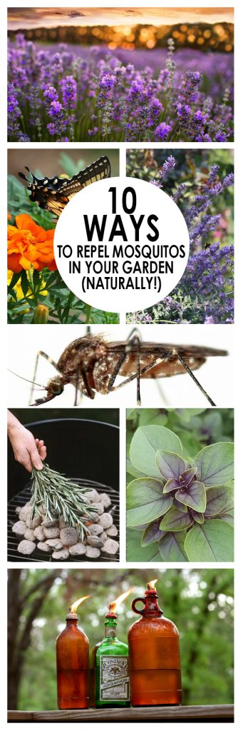 Naturally repel mosquitos, pest control, natural pest control, popular pin, DIY pest control, mosquito repellent.
