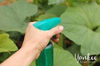DIY Pest Control, Garden Pest Control, DIY Garden Pest Control, Gardening, Garden Ideas, Gardening Tips, Essential Oils