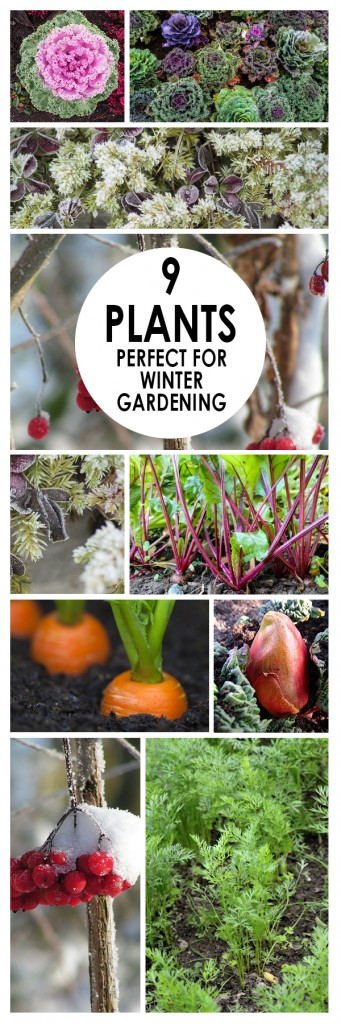 9-plants-perfect-for-winter-gardening