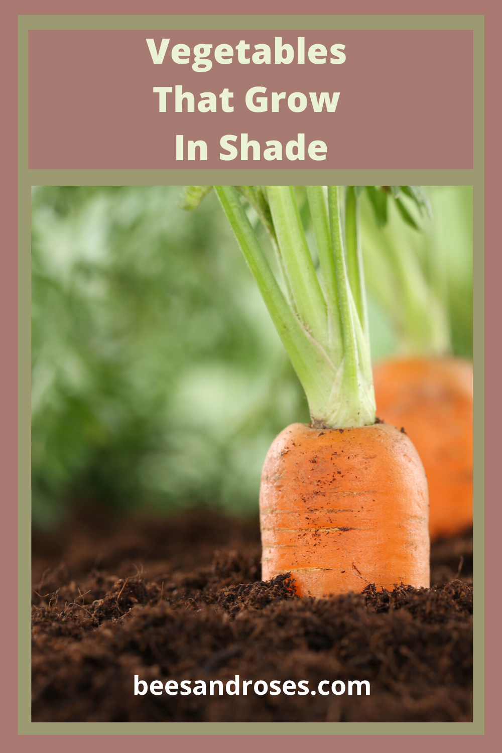 Everybody knows that most vegetables love sun, and lots of it. But, did you know there are some vegetables that love shade and do well in it? Bees and Roses is sharing with you some valuable gardening tips about veggies you can grow in the shade. Read this post for a list of those vegetables. #Shadevegetables #gardeningtips #vegetables