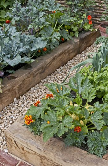 While most gardening needs sun, there are a few vegetables that do very well in the shade. So, if you have a spot that gets less sun, plants these shade vegetables and watch them grow. Kale should be at the top of your list.