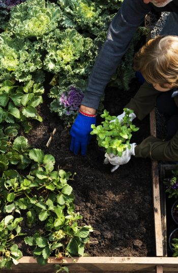 These fast growing plants are the perfect addition to your garden! In just a few weeks, you can start growing (and harvesting) these fast growing vegetables for vegetable gardening. See which ones you can add to your garden.
