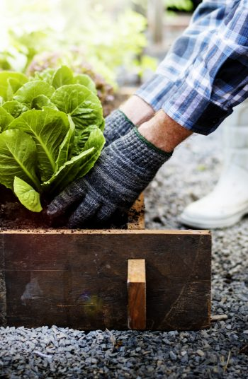 These fast growing plants are the perfect addition to your garden! In just a few weeks, you can start growing (and harvesting) these fast growing vegetables for vegetable gardening. You will be amazed.