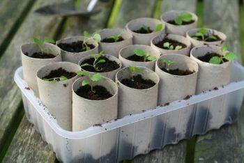10-diy-seed-starter-pots