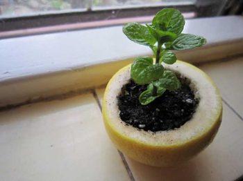 10-diy-seed-starter-pots3