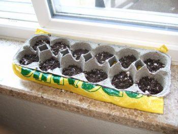 10-diy-seed-starter-pots6
