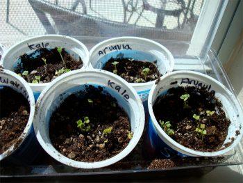 10-diy-seed-starter-pots7