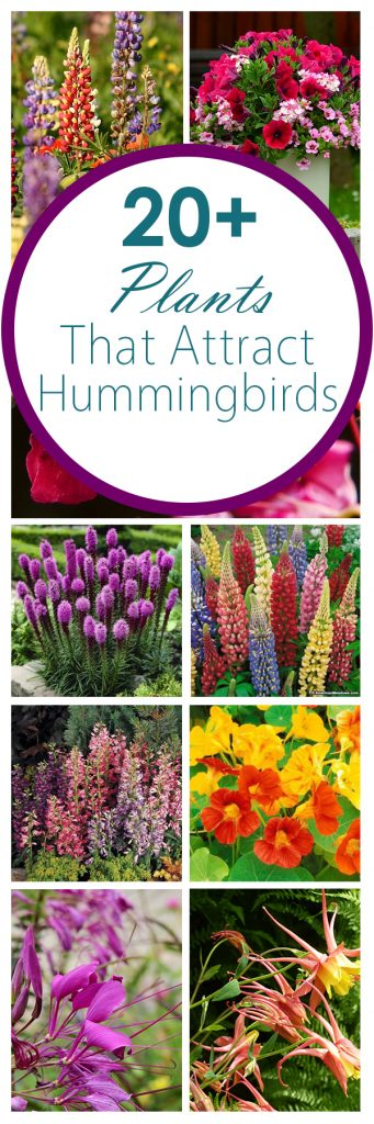20-plants-that-attract-hummingbirds